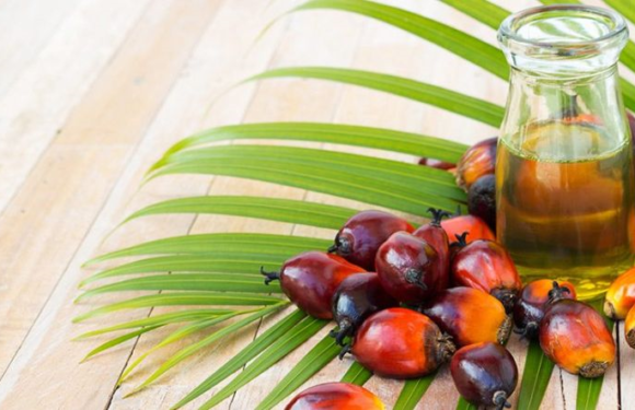 PAY ATTENTION TO A NEW BIG EUROPEAN CENTERED SMEAR CAMPAIGN ON PALM OIL